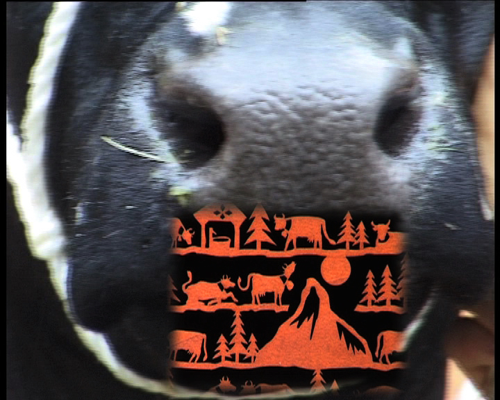 La vache, die Kuh, the cow,