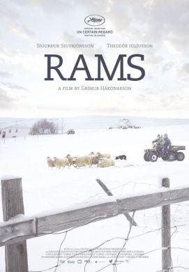 Icelandic film RAMS wins top prize in Un Certain Regard