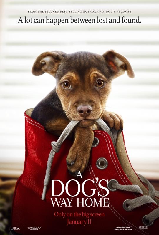 a-dog-s-way-home-dom-ADWH_OnLine_1SHT_6072x9000_TSR_03_rgb.jpg